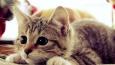 Jakim byłbyś kotem?
