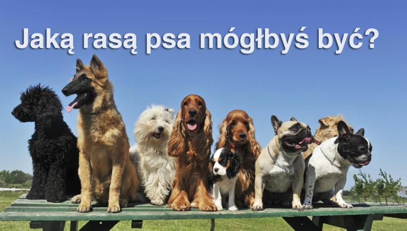 Jaką rasą psa mógłbyś być?