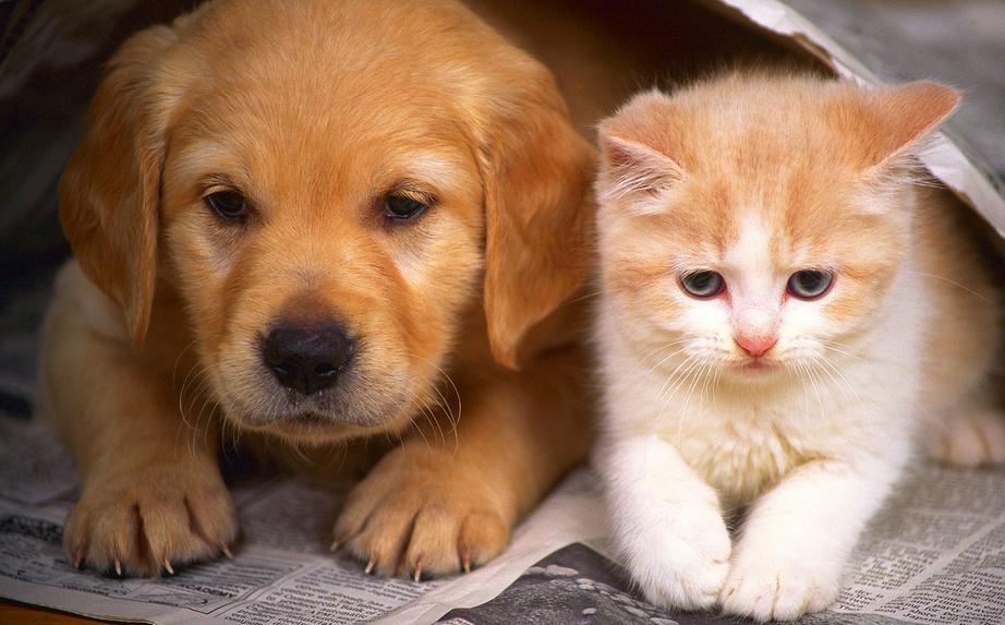 Kot czy pies? Kto bardziej do Ciebie pasuje?