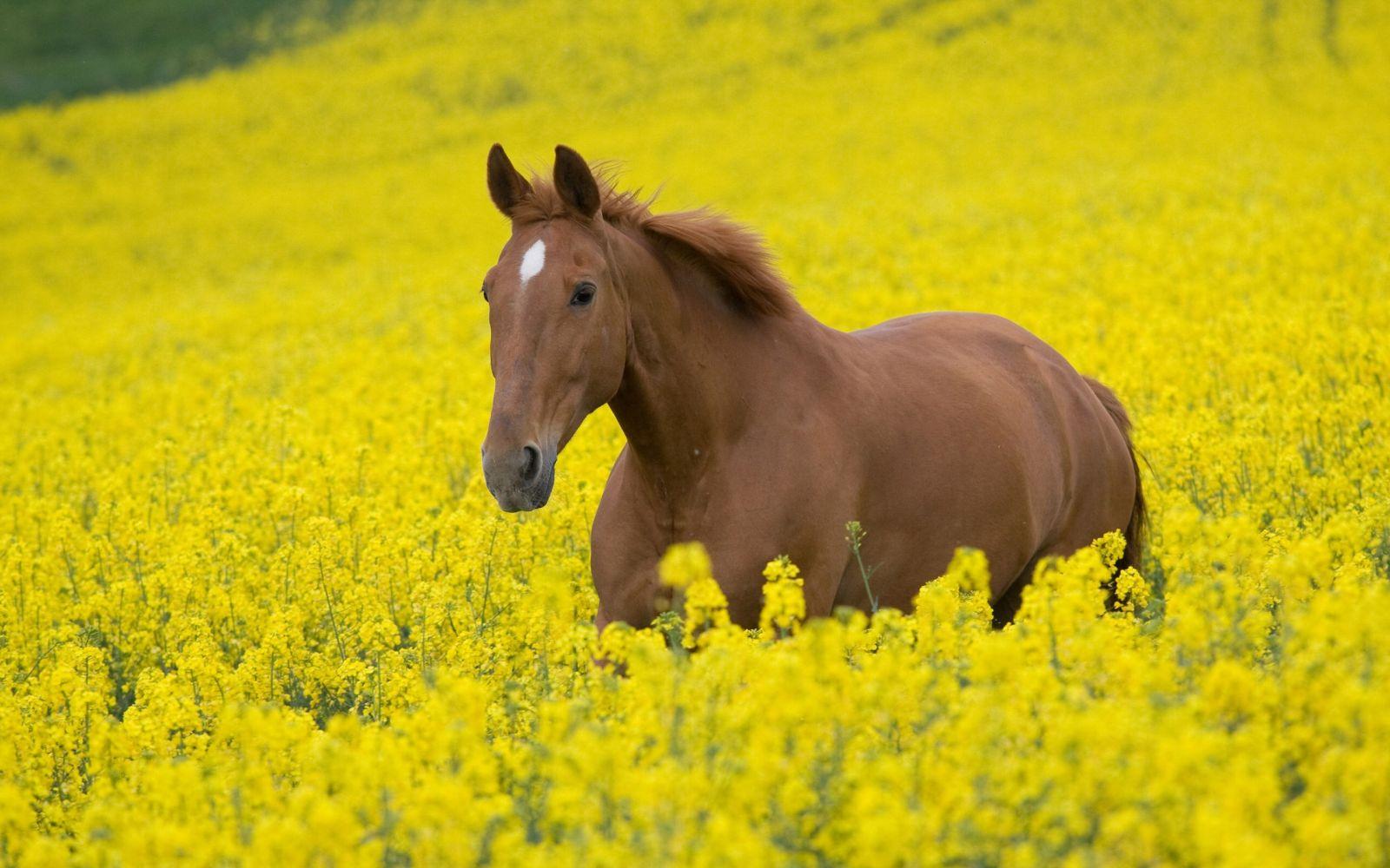 Jakim jesteś koniem?