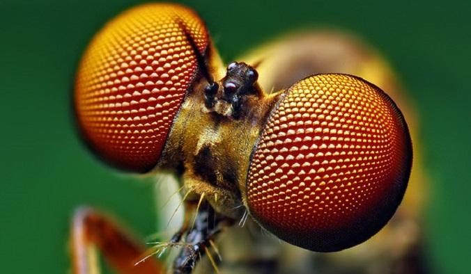 Jakim jesteś owadem?