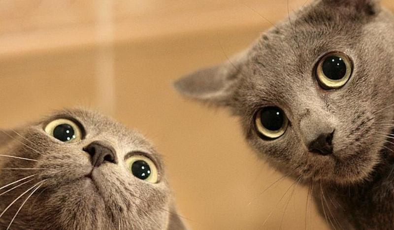Czy jesteś kotomaniakiem?