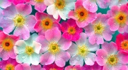 Jakim kwiatem jesteś?