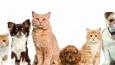 Jakie zwierzątko domowe najbardziej do Ciebie pasuje?