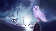 Jakie zwierzę powinieneś zabrać do Hogwartu?