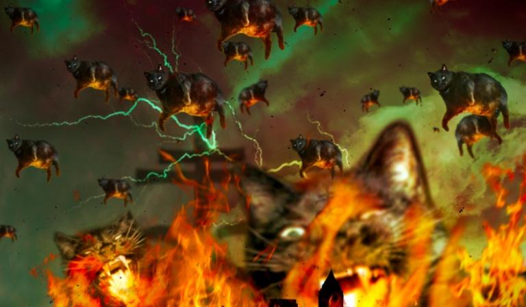 Czy uda Ci się przetrwać apokalipsę kotów?!