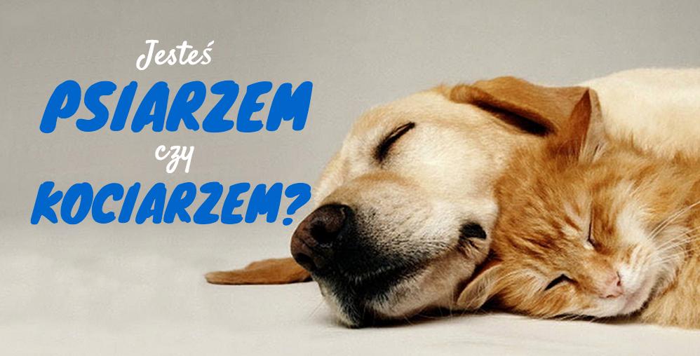 Zgadniemy czy jesteś psiarzem czy kociarzem?