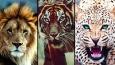 Który dziki kot pasuje do Twojej osobowości?