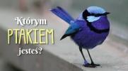 Którym ptakiem jesteś?