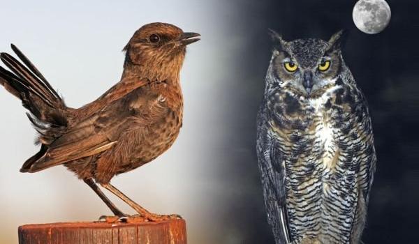 Jesteś rannym ptaszkiem czy nocnym markiem?