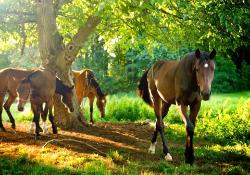 лошадь конь лес поляна  № 99080 загрузить