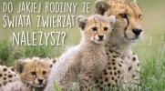 Do jakiej rodziny ze świata zwierząt należysz ?