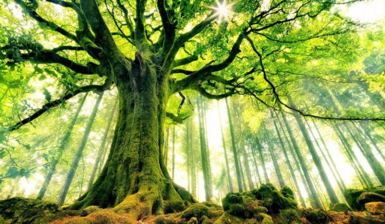 Jakim drzewem jesteś?