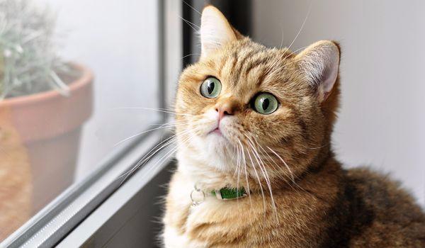 Co ukrywa przed Tobą Twój kot?