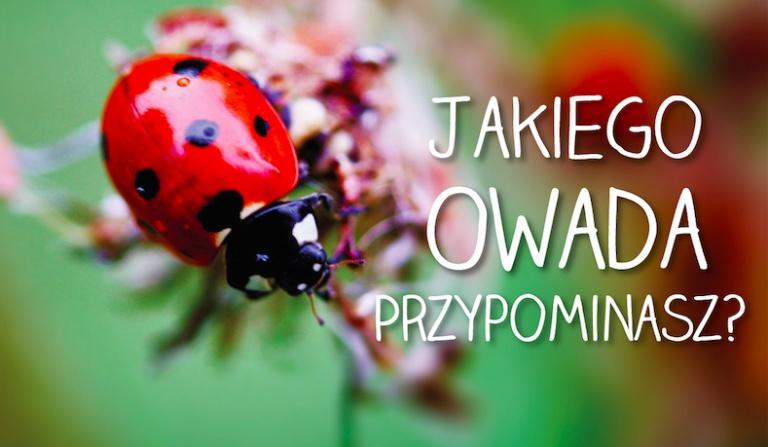 Jakiego owada przypominasz?