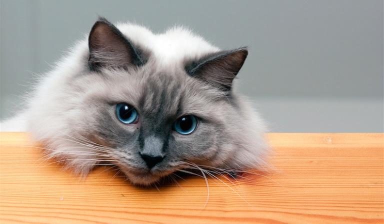 Jaka rasa kota do Ciebie pasuje?
