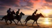 Która dyscyplina jeździecka pasuje do Ciebie najbardziej?
