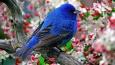 Czy rozpoznasz te ptaki?