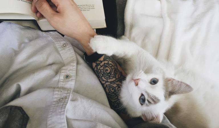 Jak dobrze znasz się na kotach?