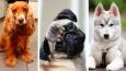 Którą rasą psa jesteś?