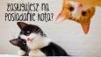 Czy zasługujesz na posiadanie kota?