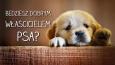 Czy będziesz dobrym właścicielem psa?