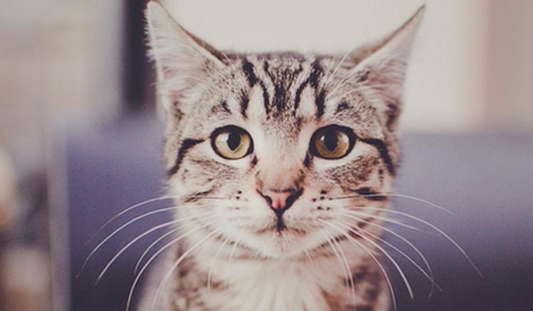 Jakim byłbyś kotem domowym?