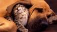 Masz kocią czy psią osobowość?