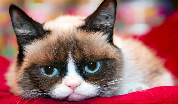 Co wiesz o Grumpy Cat?