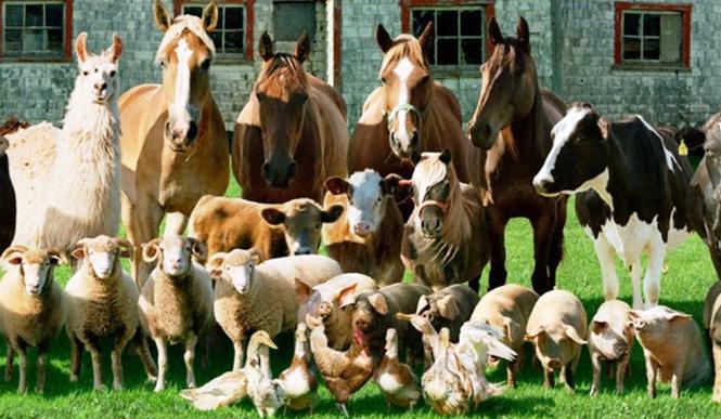 Jakim zwierzęciem z gospodarstwa jesteś?