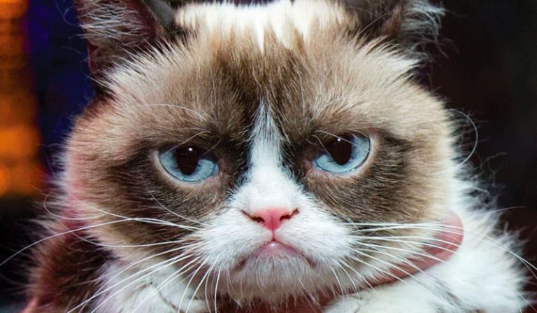 Którym sławnym internetowym kotem jesteś?