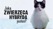 Jaką zwierzęcą hybrydą jesteś?
