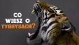 Co wiesz o tygrysach?