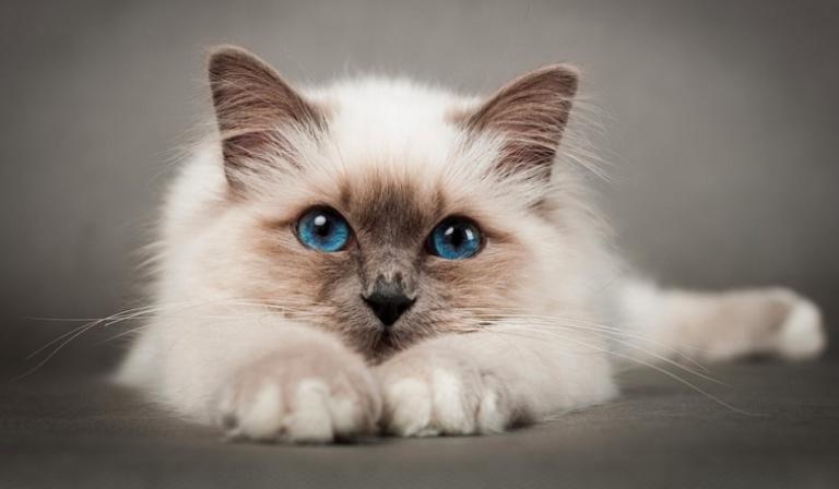 Zostań kotem na jeden dzień!