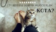 Czy będziesz dobrym właścicielem kota?