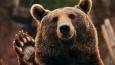 Jakim niedźwiedziem jesteś?