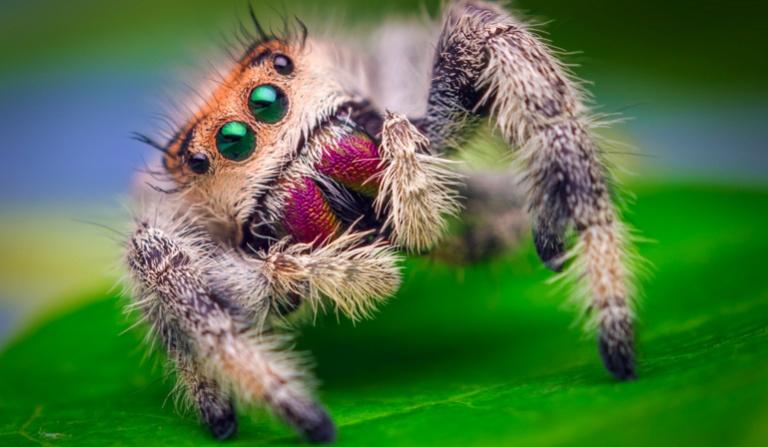 Jak dobrze znasz pająki i skorpiony?