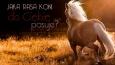 Jaka rasa konia do Ciebie pasuje?