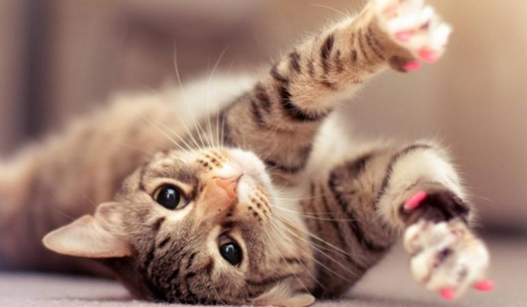 Jak potoczy się Twoje kocie życie?