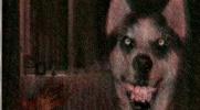 Czy Smile Dog będzie u Ciebie szczęśliwy?