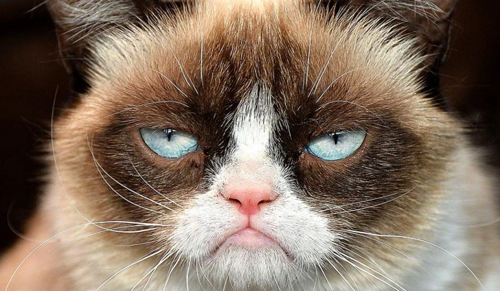 Czy zaopiekujesz się dobrze Grumpy Cat?