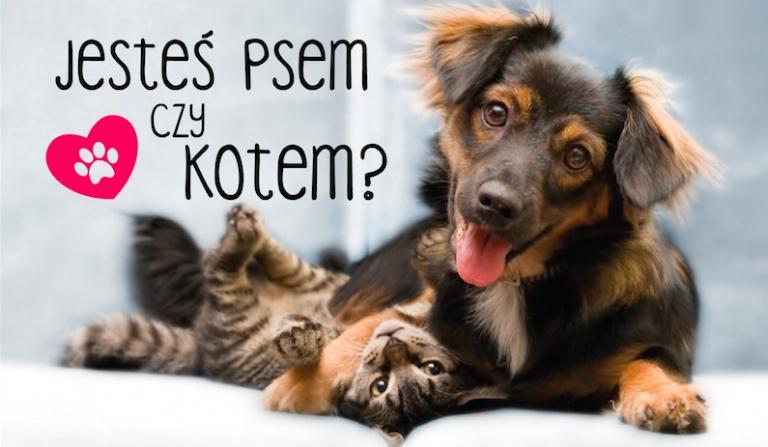 """Jesteś psem czy kotem? Na podstawie pytań """"Co wolisz?""""."""