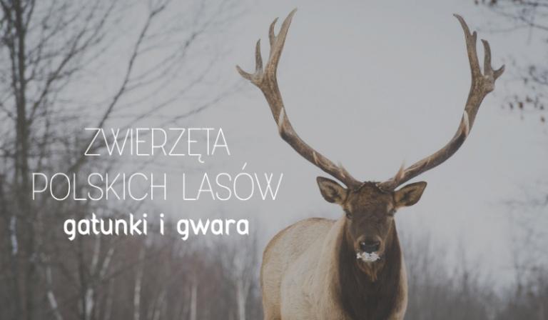 Zwierzęta polskich lasów – gatunki i gwara