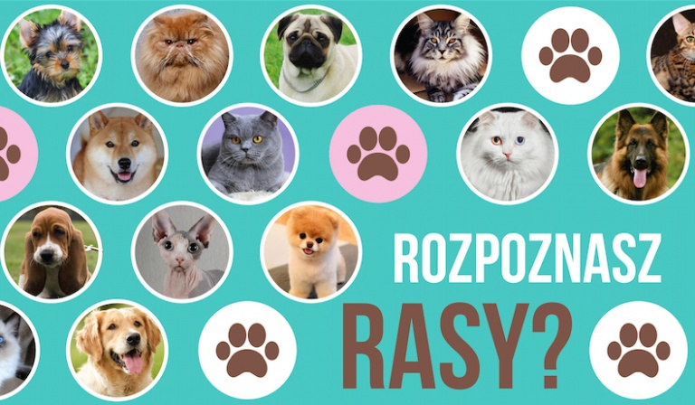 Jak dobrze znasz rasy psów i kotów?