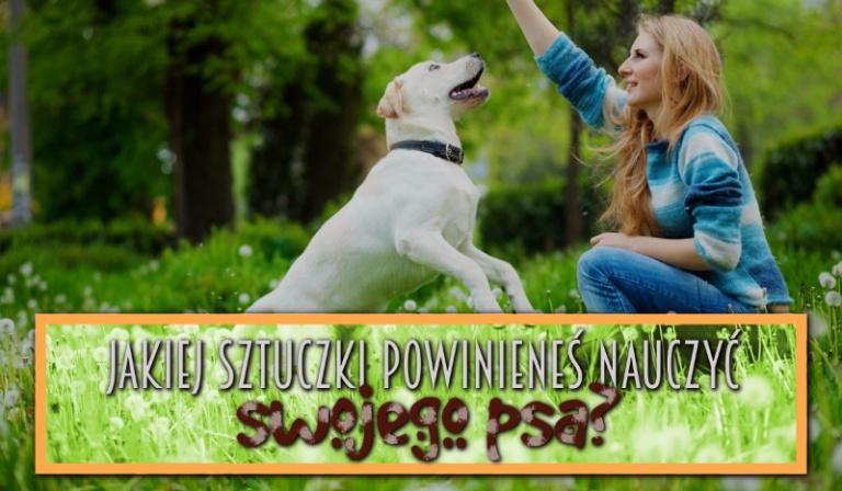 Jakiej sztuczki powinieneś nauczyć swojego psa?