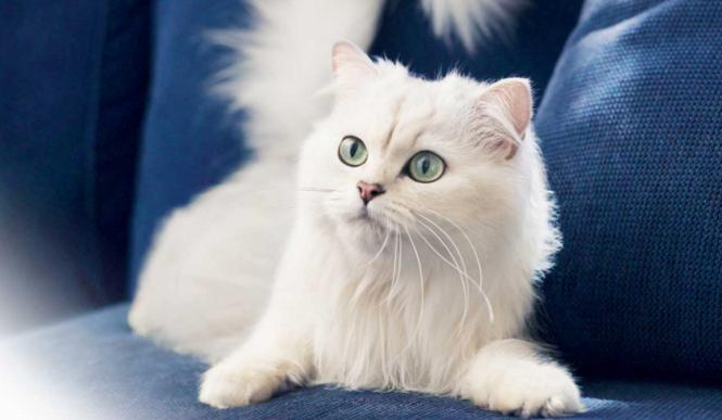 Jaki typ kota powinieneś mieć w domu?