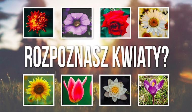 Czy uda ci się rozpoznać nazwy wszystkich 28 kwiatów po ich zdjęciach?