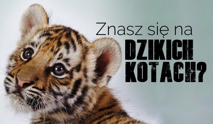 Czy znasz poszczególne nazwy dzikich kotów?