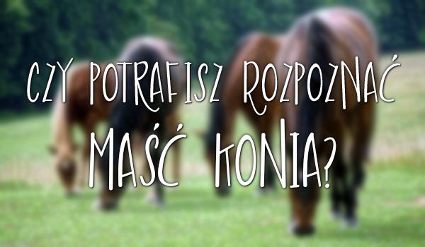 Czy potrafisz rozpoznać maść konia?