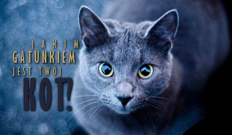 Jakim gatunkiem jest Twój kot?
